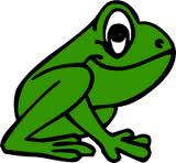 frog 8